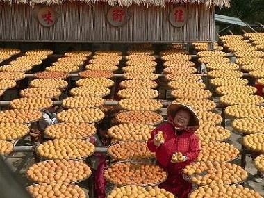 新竹柿餅‧味衛佳柿餅加工